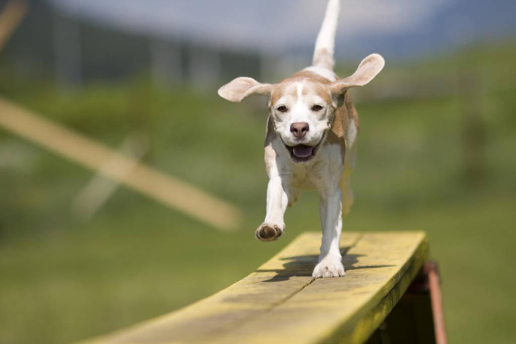 Mi offro volontaria per istituire un\'area verde per i cani a Varese