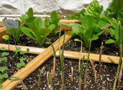 orto giardinaggio
