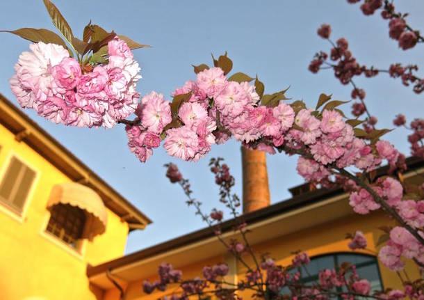 Primavera a Busto Arsizio