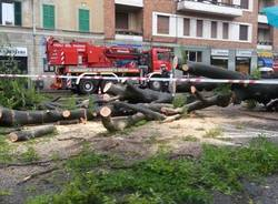 albero caduto biumo inferiore