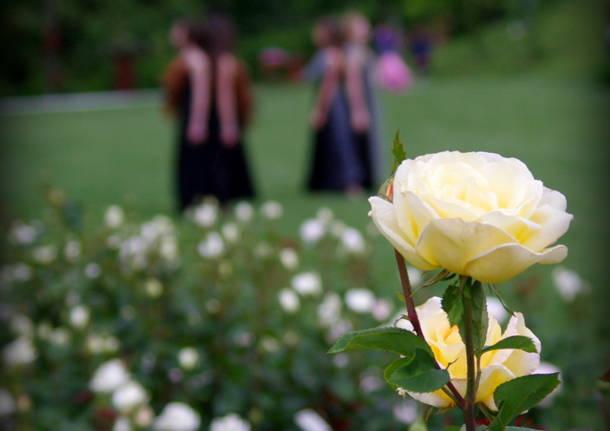 La Festa della Rosa