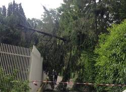 Luvinate albero caduto via Panera