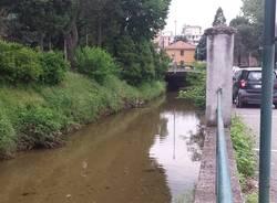 Pesci nell'Arnetta