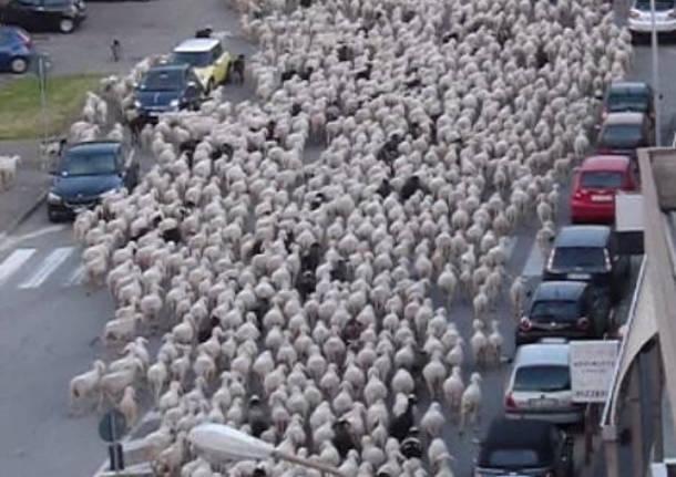 Pecore nel centro di busto arsizio for Le torri arredamento busto arsizio