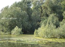 Alghe nel Lago Maggiore