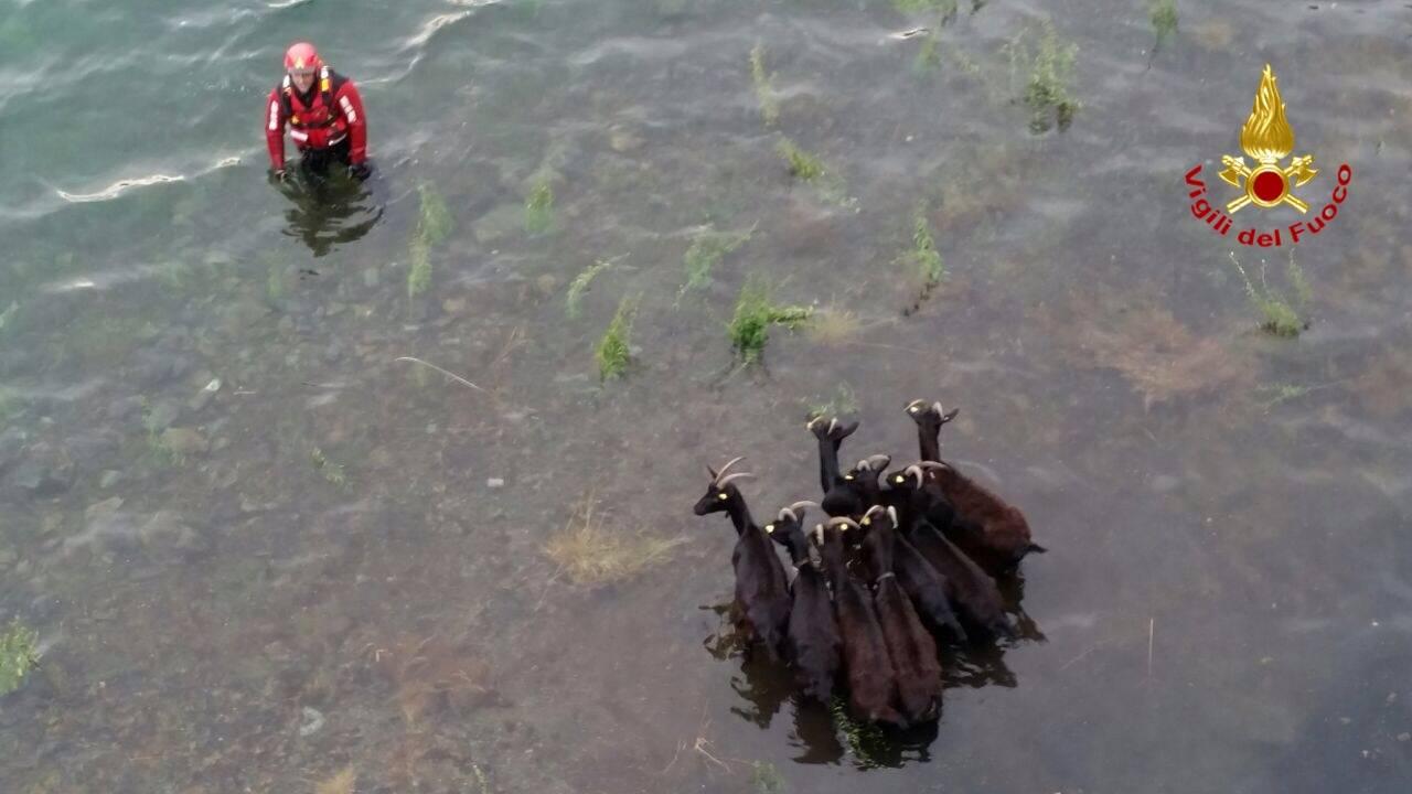 capre salvataggio saf vigili del fuoco lago delio