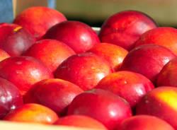 expo verdura frutta
