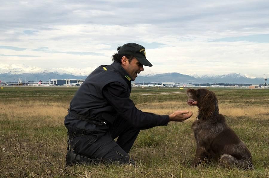 malpensa guardia di finanza cane antidroga