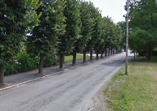Strada e ciclabile al posto degli alberi si ri accende - Alberi adatti per viali ...