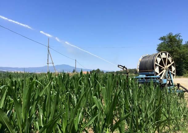 L 39 agricoltore latitante arrestato deve scontare 8 mesi for Getti x irrigazione