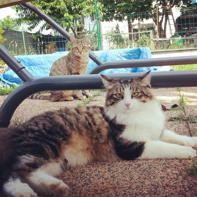 Leo & Birba