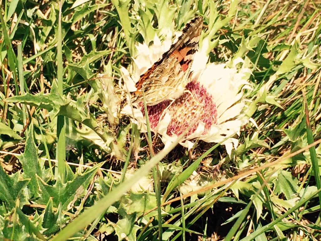 farfalle monte lema