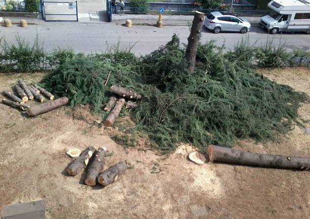 I pini abbattuti di via Giuseppe di Vittorio