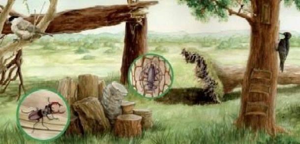 la vita infinita del legno