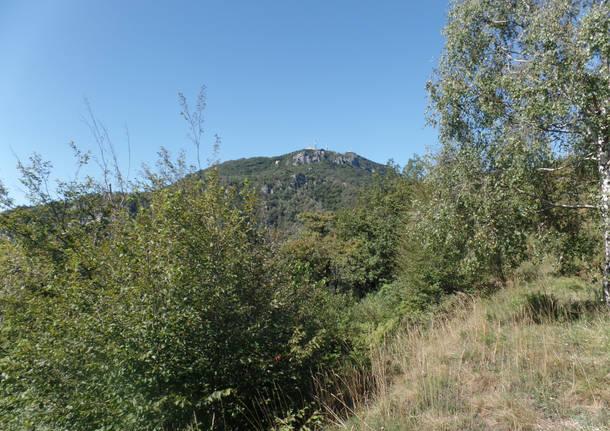 La mentuccia montana