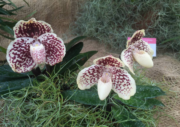 "La ""top ten"" delle orchidee in mostra"
