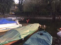 lago di piazza cazzago brabbia 29 settembre 2015