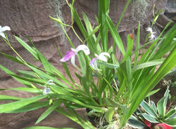 Orchidee in mostra