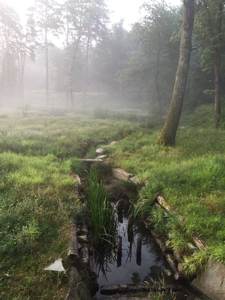 Vedano Olona: il Sentiero delle Rane
