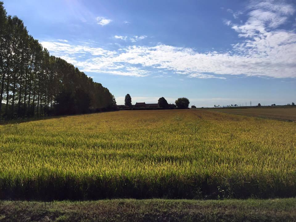 Via Francigena Lombardia: da Robbio a Mortara