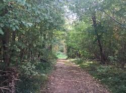 bosco gallarate sentiero