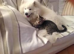 Cani e gatti che dormono (foto dei lettori)