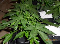 polizia locale legnano marijuana