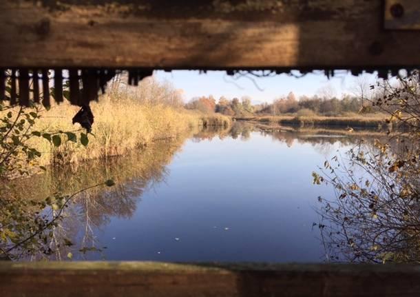 11 novembre 2015 palude brabbia inarzo