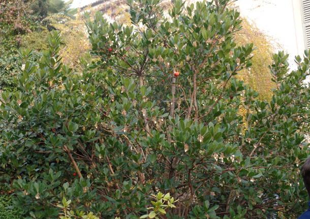 L'albero dei tulipani