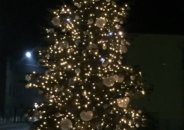 L'albero di Natale è giunto a piazza San Pietro dal Trentino
