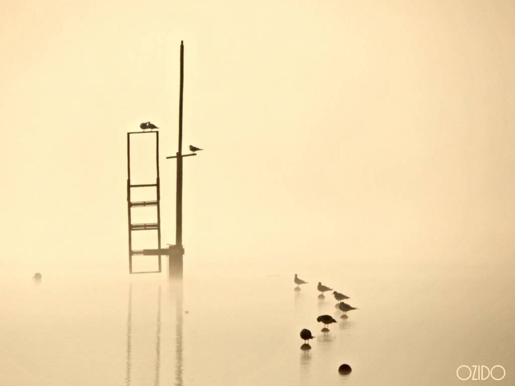 Ombre sul lago nella nebbia
