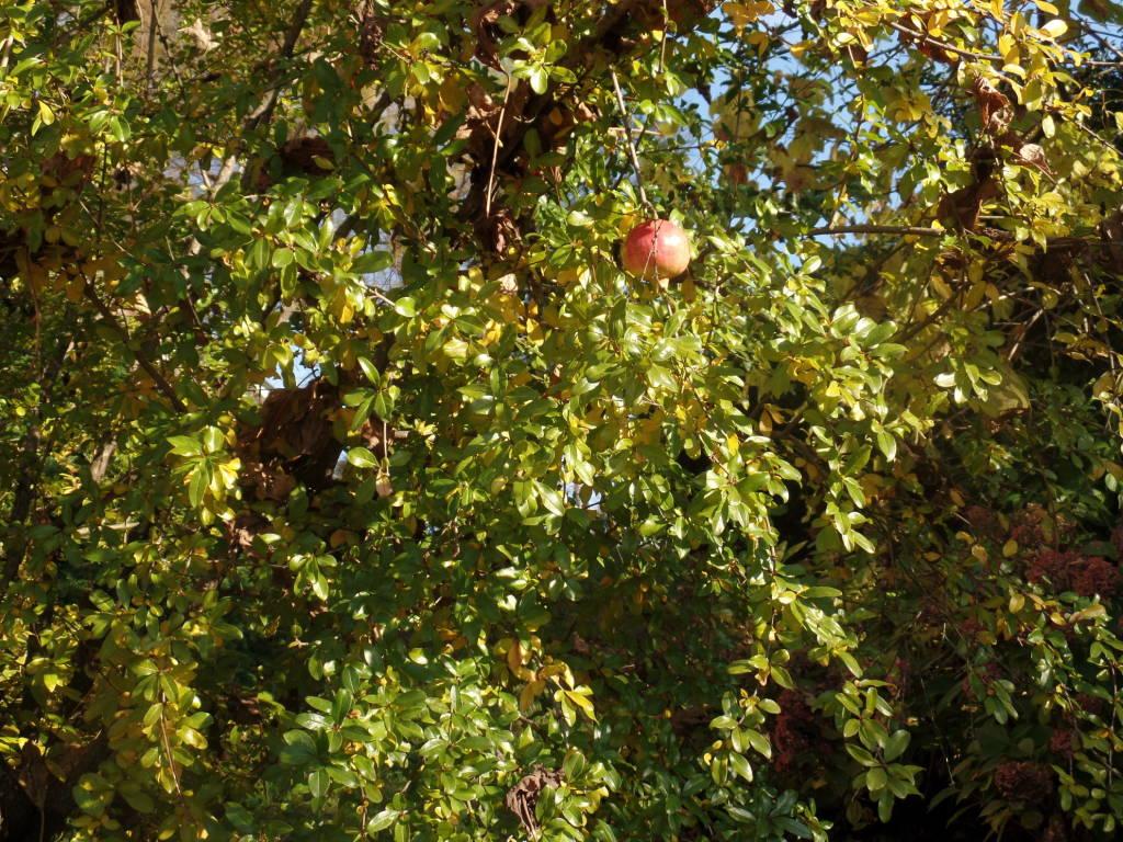 Gli alberi di Villa Ponti