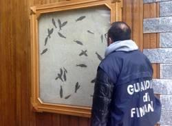 """Guardia di Finanza, operazione """"Era Glaciale"""""""