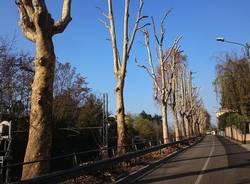 Jerago con Orago: manutenzione straordinaria per i platani di via Milano