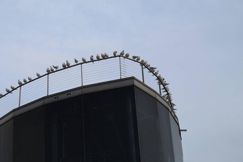 uccelli a Prua
