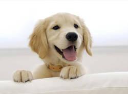 Consulta canina