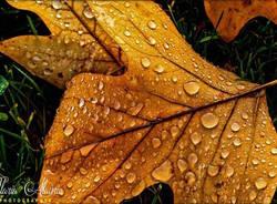 foto lettori autunno