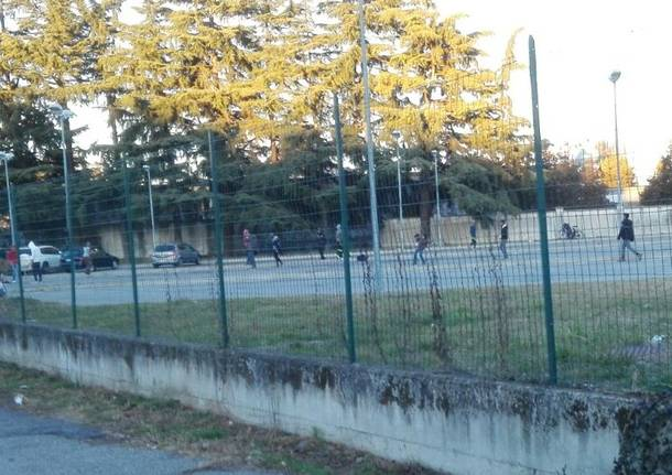 Cricket all'area mercato di Gallarate