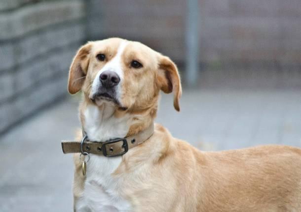 Tom cane in cerca d'affetto