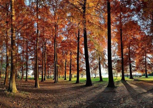 alberi ornamentali alberi ornamentali corso di formazione degli agronomi