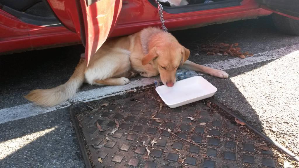 cane chiuso auto soccorso