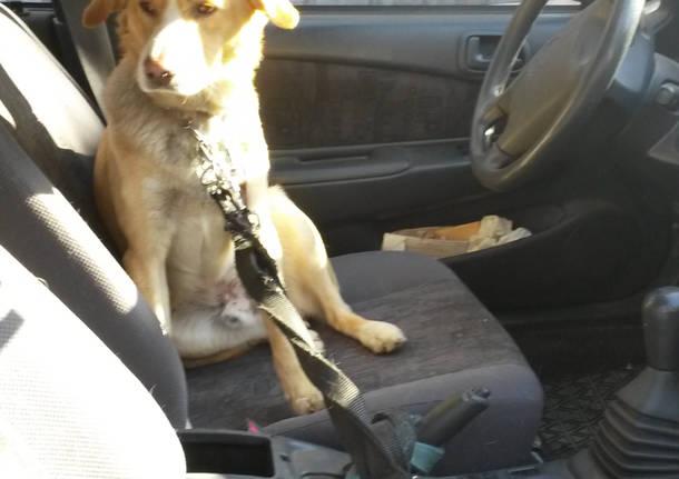 Cane chiuso in auto soccorso OK