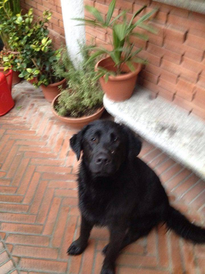 Cane trovato a Galliate