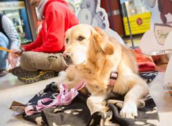 Cani da pet therapy alla Coop