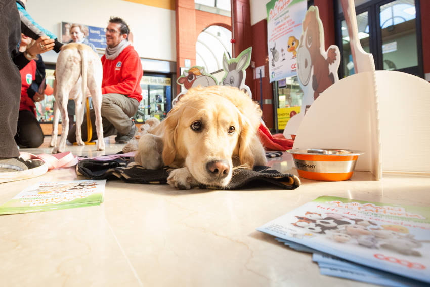Cani da pet therapy alla Coop