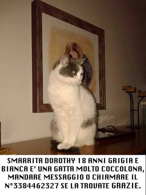 Gattina smarrita