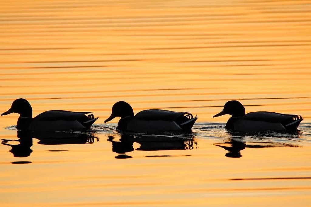 Sul lago dorato...