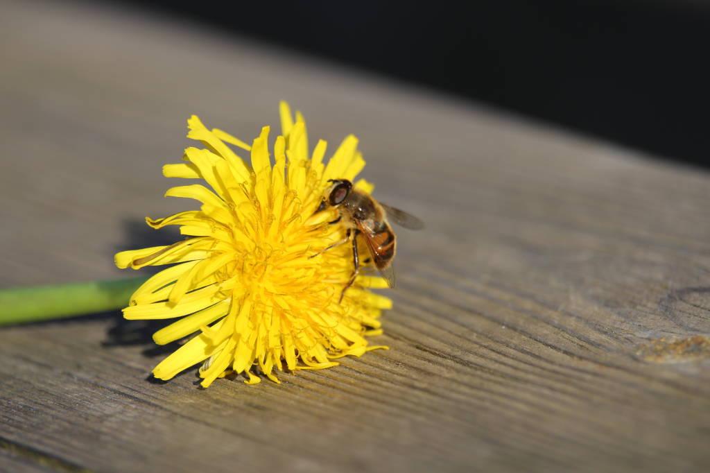 Il fiore sulla panchina