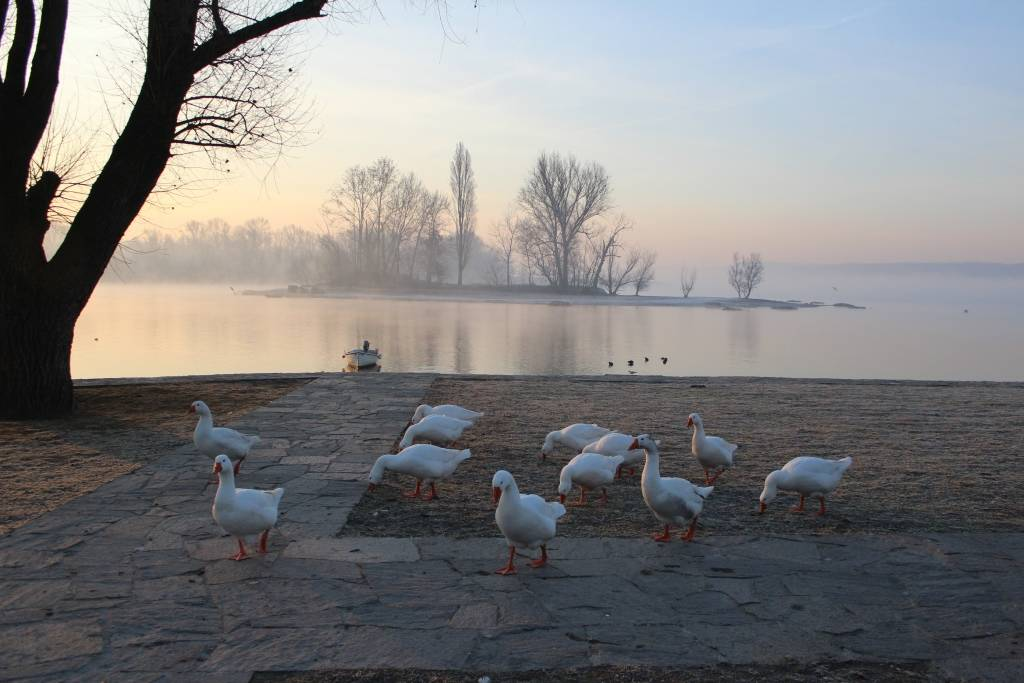 Una fredda mattina di Gennaio