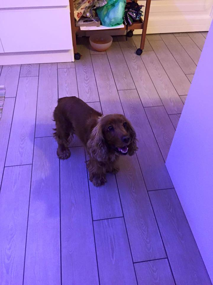 Una bella cagnolino smarrita